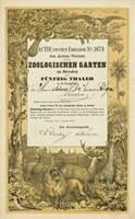 Aktie des Actien-Vereins für den Zoologischen Garten zu Dresden