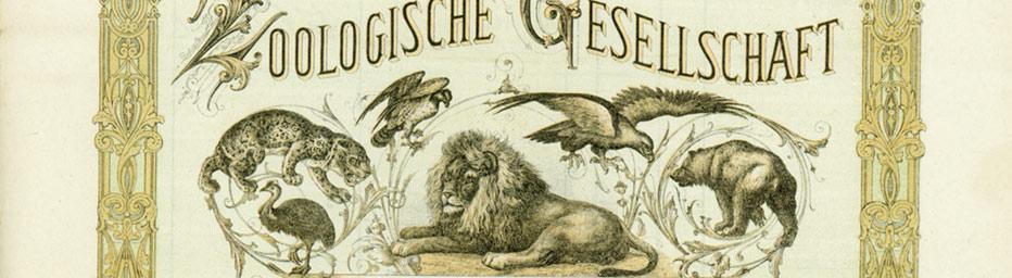 Aktie der Neuen Zoologischen Gesellschaft (Ausschnitt)